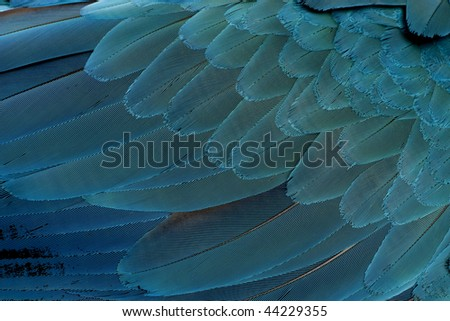 Close-up of Blue-and-yellow Macaw's feathers, Ara ararauna