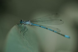 Close up of blue dragonfly on leaf in the middle of forest.