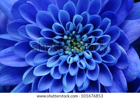 Close up of blue flower for background or texture