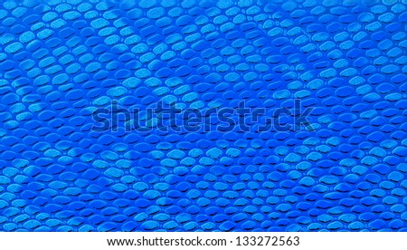 Close-up of blue snakeskin leather