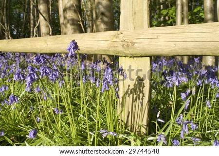 Close-up of bluebells next to fence post