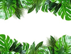 Close up of bouquets of various green fresh tropical leaves isolated on white background with clipping path. Design template. Frame with copy space for text.