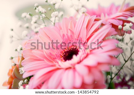 Close-up of bright pink gerber flower on an defocused background.