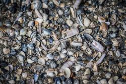 Close up of broken shells on the beach.