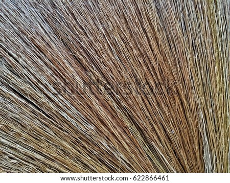 close up of broom grass as wallpaper ez canvas