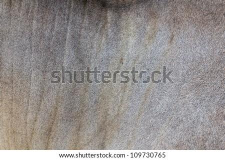 Close Up of Buffalo fur background