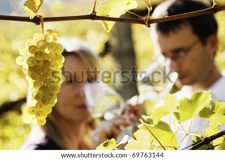 Close-up of bunch of green grapes hanging from vine in vineyard with blurred male and female winemaker in background holding glasses for wine tasting.