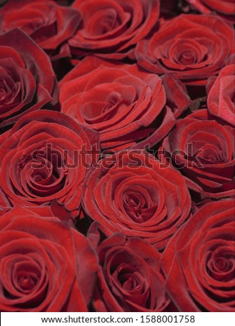 Close up of bunch of roses