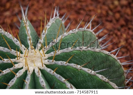 Close up of cactus 714587911