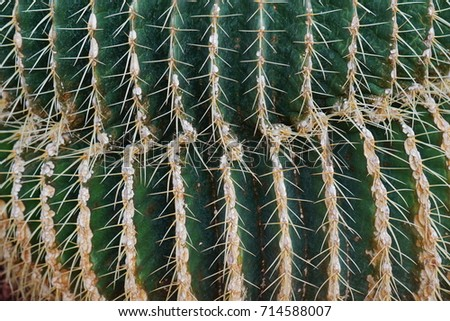 Close up of cactus 714588007