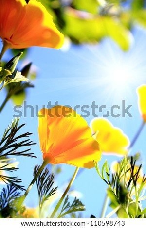 close up of california poppy flower #110598743