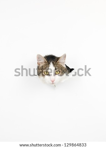 close-up of cat hed coming out through a hole in a white paper, isolated