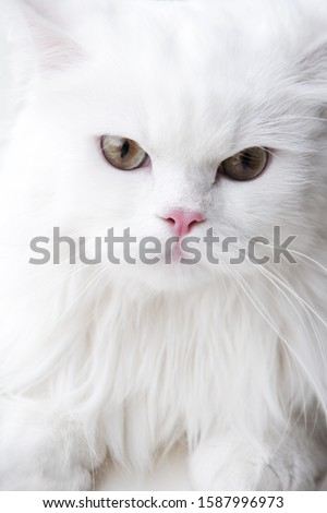 Close up of cat's face