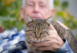 Close up of cat sitting in old man's lap and enjoying cuddling
