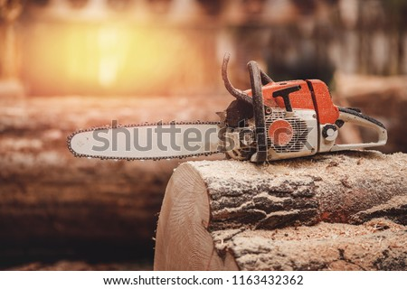 Close-up of chainsaw lies on sawn wood sawmill. Concept logging industry