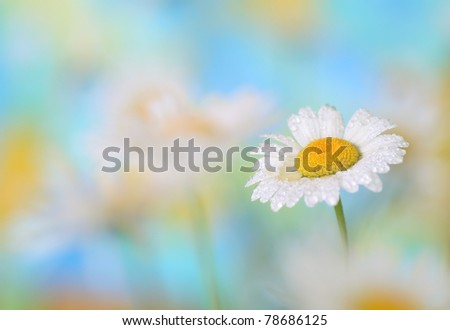 Close-up of chamomile
