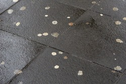 Close-up of Chewing Gum on the Street. View of Chewing gums on wet asphalt. Street full of Chewing Gums on a rainy Day.