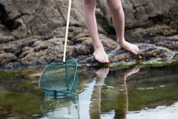 Close Up Of Child Fishing In Rockpool With Net