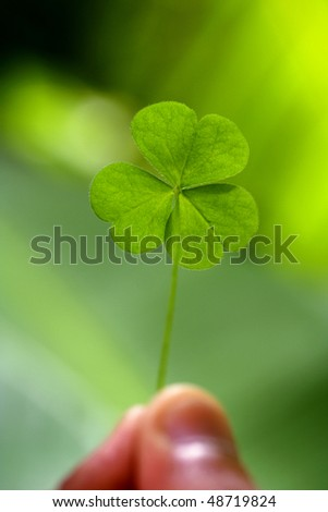 Close up of clover leaf