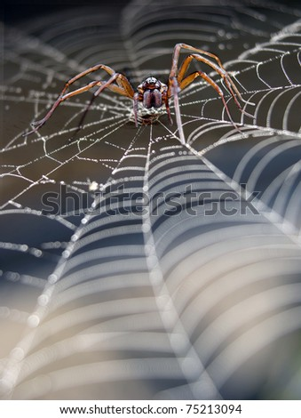 Close up of cobweb with spider