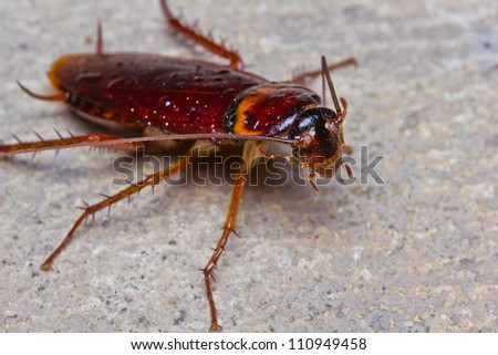 Close up of cockroach on floor