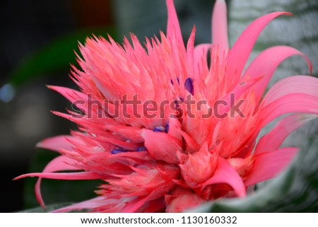 Free Photos Red Blooming Bromeliad Plants Bromeliad Plant Silver