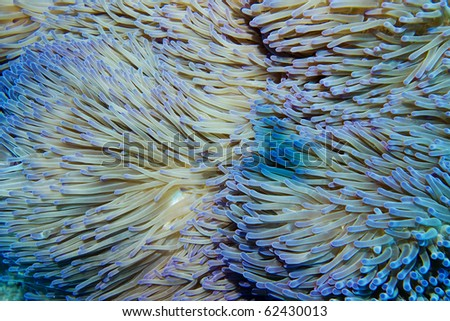 close up of colorful anemone