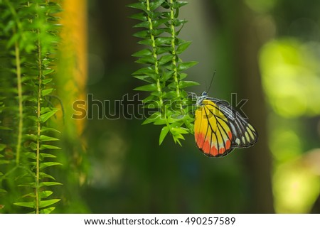 Close up of colorful butterfly resting on green fern leaf