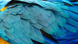 Close up of colorful feathers texture background