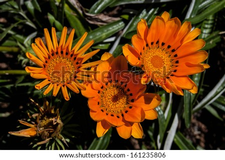 Close up of colorful flowers with bee
