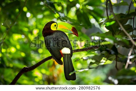 Close up of colorful keel-billed toucan bird