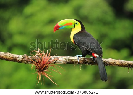 Shutterstock Close up of colorful keel-billed toucan bird