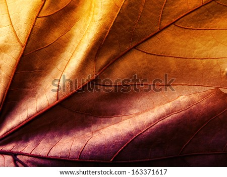 Close up of colorful  leaf orange and violet #163371617