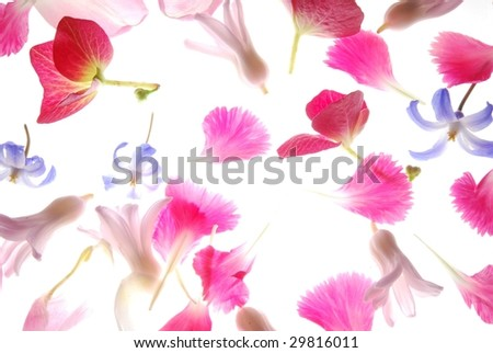 Close-up of colorful petals against white background