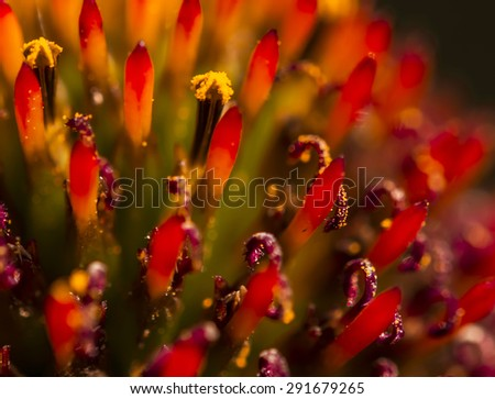 Close Up Of Cone flower