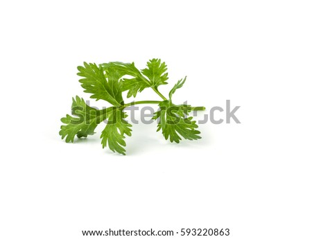 close-up of coriander leaves isolated on  white background. #593220863