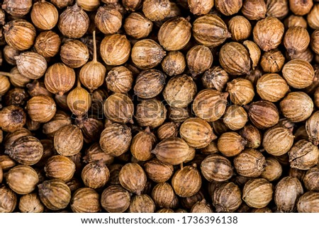 Close up of coriander seeds, suitable as background image. Spicery background. Seeds of coriander can sprout for microgreen Foto stock ©