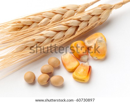 Close up of corn, wheat and soybeans shot on white background with soft shadow