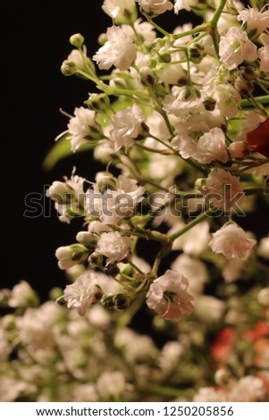 Close up of countless little white blossoms and green flower buds. Macro shot, selective focus, bokeh effect. Blurred black background. Vertical format.