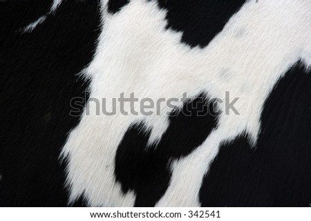 close-up of cow hide