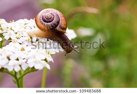 Close-up of crawling snail on green leaf early in the forest.. #109483688