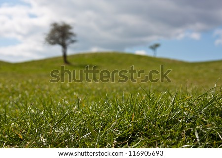 Close up of crisp green grass from a meadow with two trees in the distance against a light blue sky with clouds