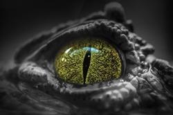 Close-up of Crocodile's Eye