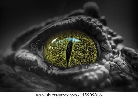 Close-up of Crocodile\'s Eye
