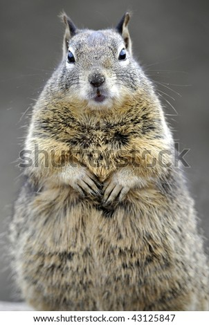close up of curious brown ground squirrel