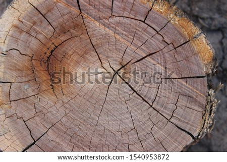 close up of cut timber showing the grain of the timber