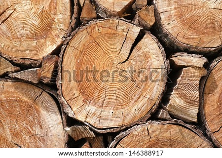 Close up of cut tree trunk