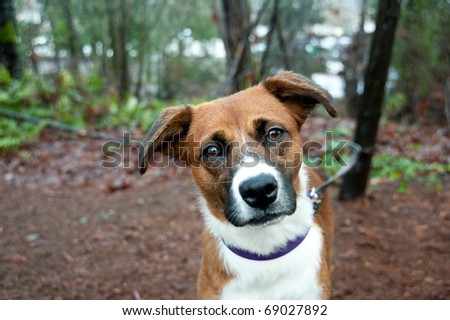 Close Up of Cute Mix Breed Dog Enjoying Walk in Park