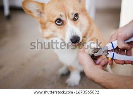 close up of cutting dog nail with a nail clipper ストックフォト ©