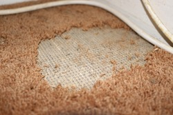 Close up of damage caused by carpet moths